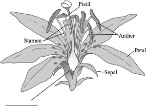 Triand easy online student testing what is the function of the unlabeled structure on this flower diagram ccuart Gallery